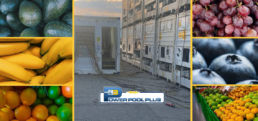 Power Pool Plus and the Cold Chain